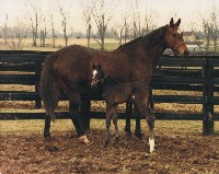 GLORIOUS SONG with NORTHERN DANCER colt, February 18, 1986