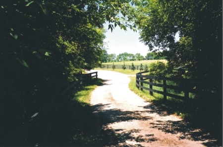 The road to the back paddocks
